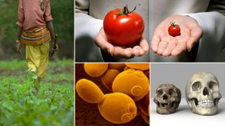 LR: Worker tending crop, GM tomato, Yeast cell, small skull