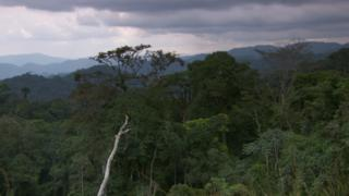 Congo basin rainforest