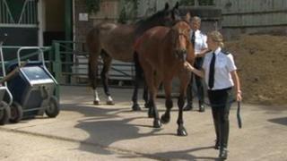 A police horse