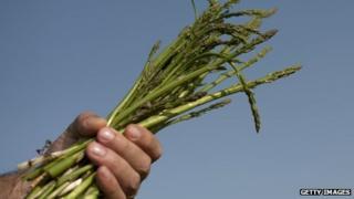 A man holding a bundle of harvested asparagus