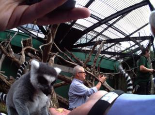 lemurs photographed on Autographer