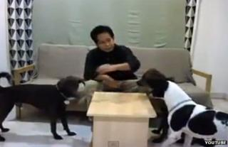 A screengrab of Maznah Mohd Yusof feeding her dogs