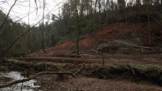 Damaged woodland at Gelt Woods, Brampton, Cumbria