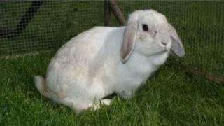 Rabbit found in bin bag