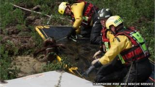 Firefighters rescue heifer from slurry pit