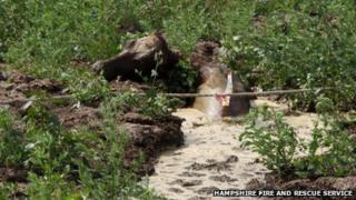 Heifer trapped in slurry pit