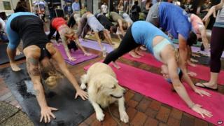 Dog watching outdoor yoga