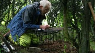 Volunteer Peter Martinson laying a badger trap