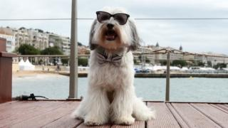 Pudsey the dancing dog wearing sunglasses