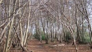 Trees with suspected ash dieback