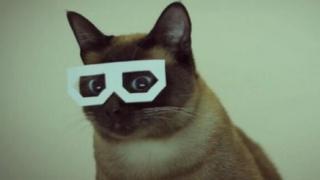 CultureTECH cat