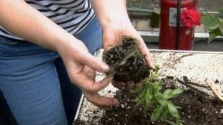 Gardener holds a plant