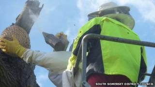 Black bees rescued from Penn Hill, Yeovil