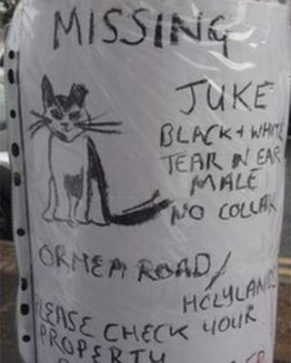 Could you recognise this cat? He has gone missing in south Belfast
