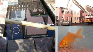 Smokey the goldfish in Harwich