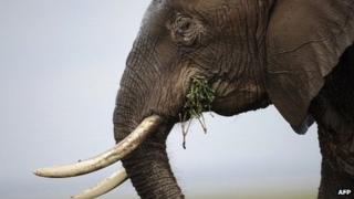 An elephant in Amboseli National Park in Kenya, December 2013