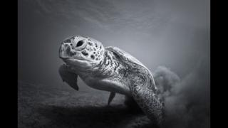The Slowest Sprinter, by Vaclav Krpelik