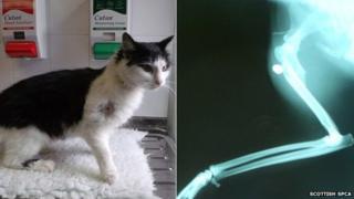 Injured cat Poppy
