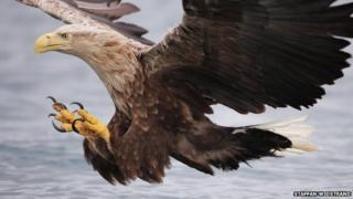 Europe's key animals 'making a comeback'