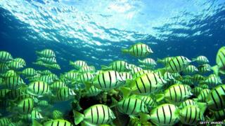 A shoal of fish pass a reef underwater