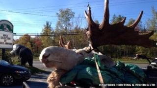 The white moose shot by hunters in the Cape Breton area of Nova Scotia