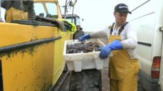 Shellfish being unloaded from boat