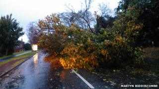 Fallen tree in Chandler's Ford