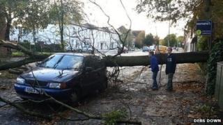 Fallen tree in Farnborough