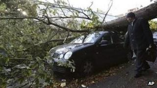 A car damaged by a fallen tree