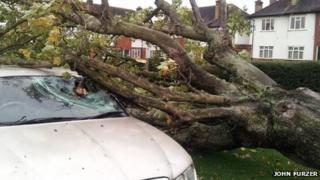 tree fallen on car