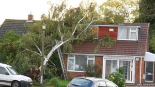 A tree brought down in Barons Mead Chippenham, Wiltshire