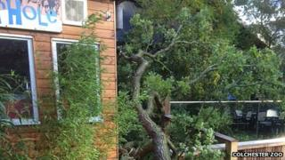 Colchester Zoo storm damage