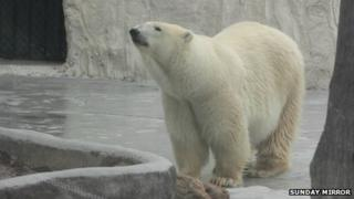 Yupi the polar bear