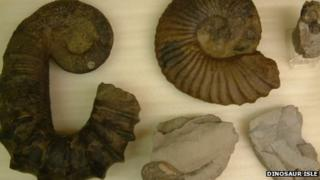 Paul Newton's ammonite collection