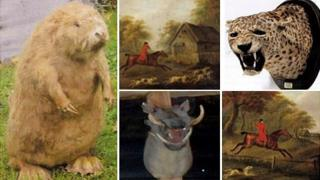 The stuffed beaver, warthog and panther and two paintings by John Nost Sartorius