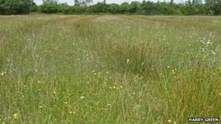 Baynhall Meadow, Worcestershire