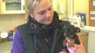 Surviving puppy