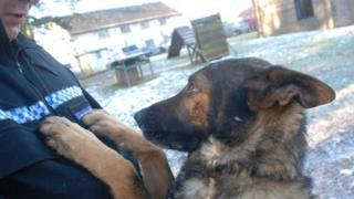 Cumbria Police dog