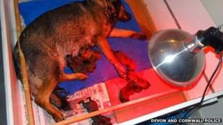 Molly and her litter under a heat lamp