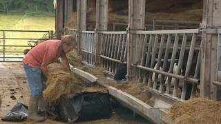 Tom Jeanes feeding his cattle