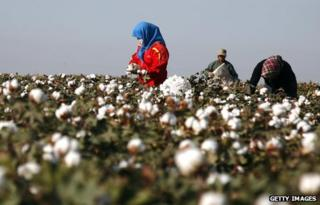 A picture of a cotton picker in China
