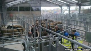 Livestock are penned in the new market