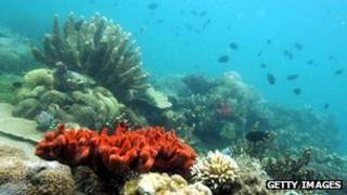 Coral (generic)