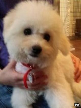 George Osborne's new dog Lola