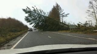 Tree blocking road