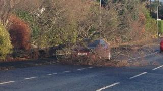 A driver had a lucky escape after a tree fell on the Ballynahinch Road out of Saintfield, County Down