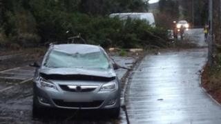 A car in Newtownabbey was damaged when a tree fell across the Antrim Road close to Belfast Zoo.