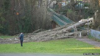 Fallen tree in Kings' Park