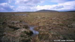 Peat land on Lewis