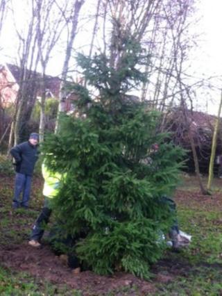 Bilsthorpe Christmas tree